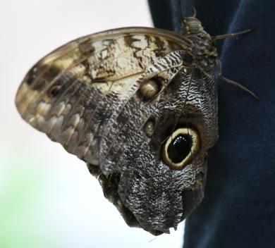 Butterfly DSC_1214